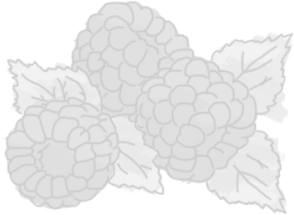 illustration of raspberries